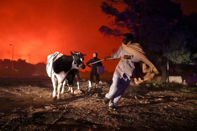 Warga mengevakuasi ternak mereka di Thrakomamadedones, utara Athena, pada 7 Agustus 2021.