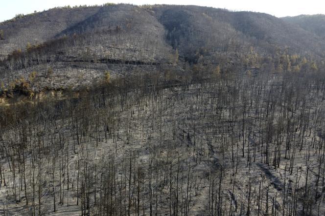 Sebuah gunung terbakar akibat kebakaran hutan di desa Papades, di pulau Evia, 160 kilometer utara Athena, pada 10 Agustus 2021.