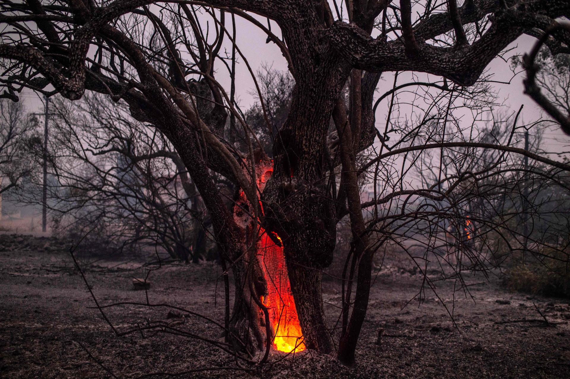Pohon terbakar di dekat kota Pefki, di pulau Evia, 9 Agustus 2021.