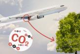 Faut-il planter des arbres pour compenser nos voyages en avion?