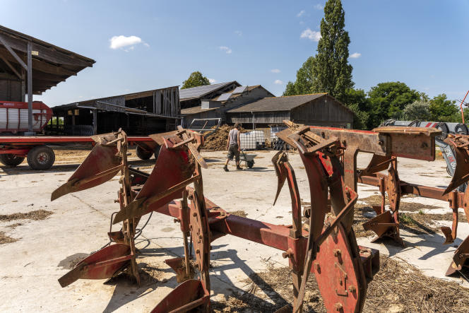 Melaine Travert va nourrir les porcs de la ferme avec une partie des céréales récoltés, la ferme de la Guilbardière, à Monthou-sur-Bièvre (Loir-et-Cher), le11août 2021.