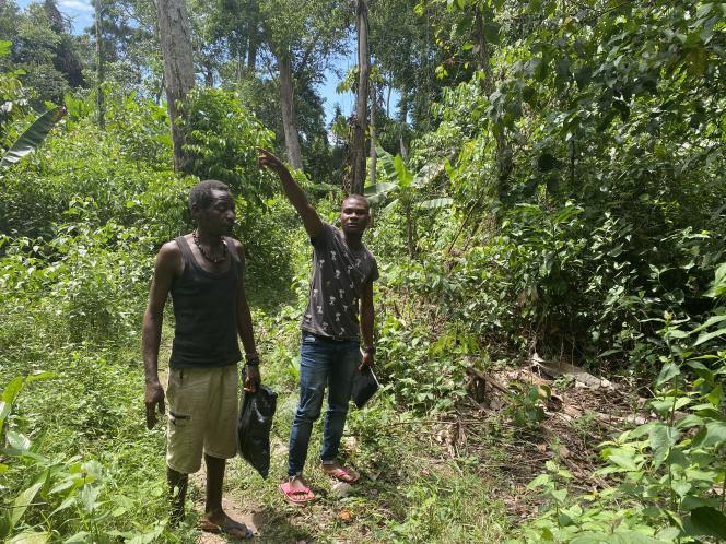 Au campement Bella, dans la région Sud du Cameroun, « Docta », le tradipraticien du village, cherche, sac en plastique à la main, les plantes et les écorces nécessaires à la fabrication de médicaments.