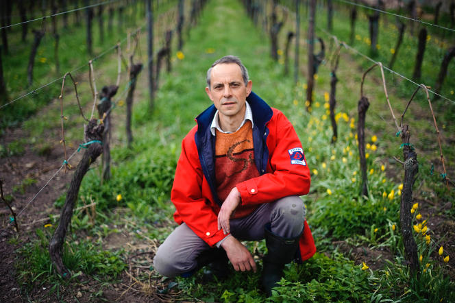 Jean-Pierre Frick n'a pu sauver qu'un tiers de sa future récolte (ici, dans ses vignes, à Pfaffenheim, en 2012).