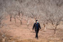 Wahid Aguertite, a farmer, walks among orange trees dried out by drought on Morocco's southern plains of Agadir in the country's agricultural heartland, on October 22, 2020. - Moroccan authorities have diverted water from the dams that irrigated farms to residential areas, in order to guarantee a supply to nearly a million people, as drought bites increasingly hard. Water levels in reservoirs stood at an average of 37 percent of capacity at the end of October, down from nearly 46 percent from a year ago. But around Agadir, the capital of the Souss-Massa region and rich in citrus fruits and seasonal vegetables, water levels are even lower. (Photo by FADEL SENNA / AFP)