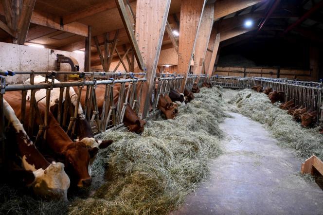 Dans une ferme à La Motte-en-Bauges (Savoie), en décembre 2019.
