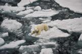 Au large de l'île du Prince George, dans l'archipel François-Joseph, dans l'Arctique, en août 2021.