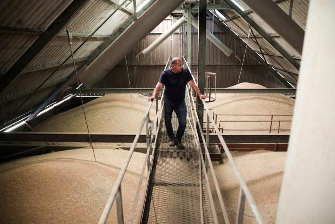 Dans le silo d'Epanvilliers rempli de ble, dans la Vienne, le 1er septembre 2021.