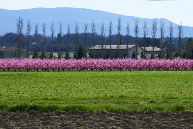 Dans la vallée de la Drôme, près de Valence, le 17 mars 2017.