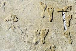 Des empreintes de pieds humains fossilisées dans la roche, au parc national de White Sands, au Nouveau-Mexique.