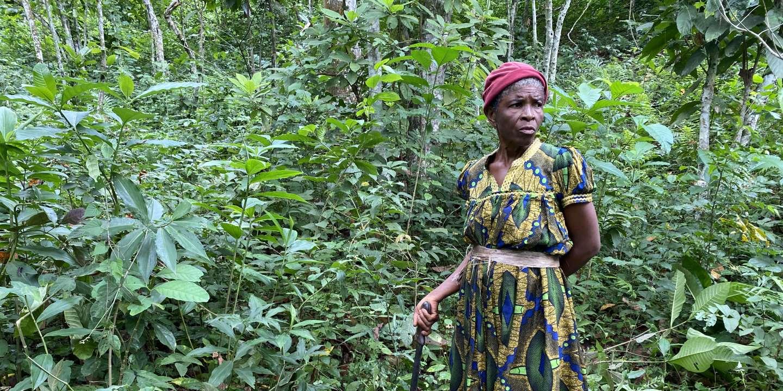 « C'est la catastrophe » : au Cameroun, les producteurs de cacao frappés par la sécheresse