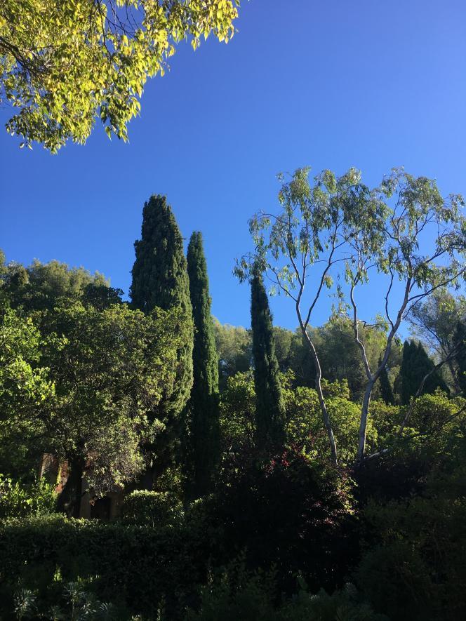 Vue de la végétation méditerranéenne, dans le domaine d'Orvès.