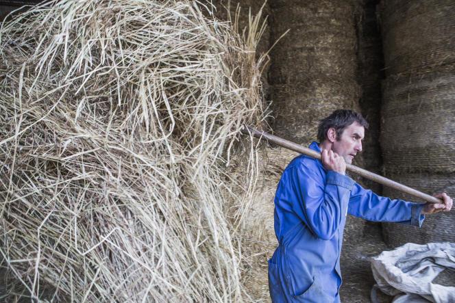 Dans une exploitation agricole de Fontaines-les-Sèches (Côte-d'Or), en 2015.