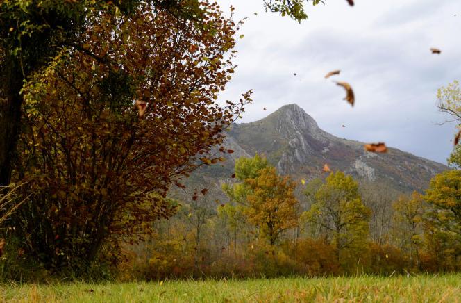 Des feuilles d'automne qui s'envolent pour la dernière note sur le blog L'Arbre aux contes.