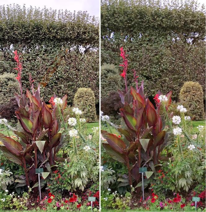 Les photos du Samsung A42 (à gauche) souffrent parfois d'un excès de netteté lorsqu'on photographie la nature. On peut préférer la douceur des images du Fairphone 4 (à droite, légèrement retouchées).