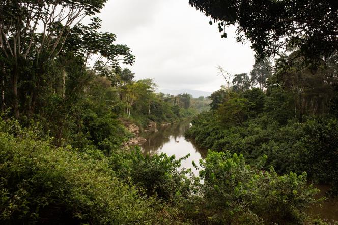 Les forêts du parc Moukalaba Doudou, au Gabon, en octobre 2019.