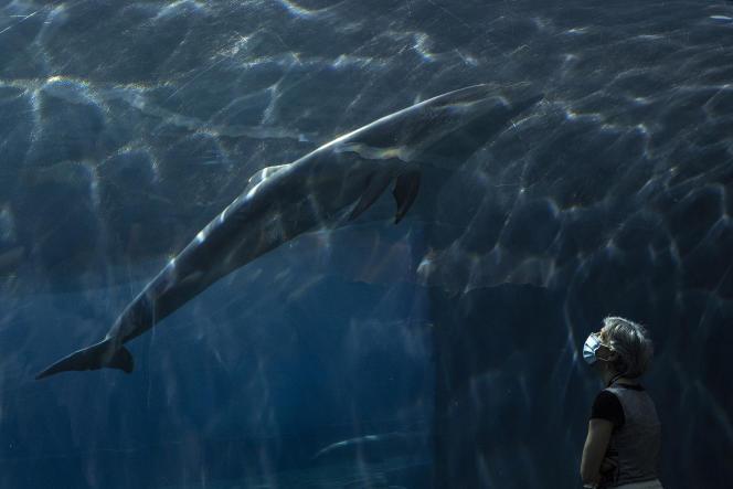Seorang wanita menyaksikan lumba-lumba berenang di akuarium di Genoa (Liguria), Italia, pada 22 Mei 2020.