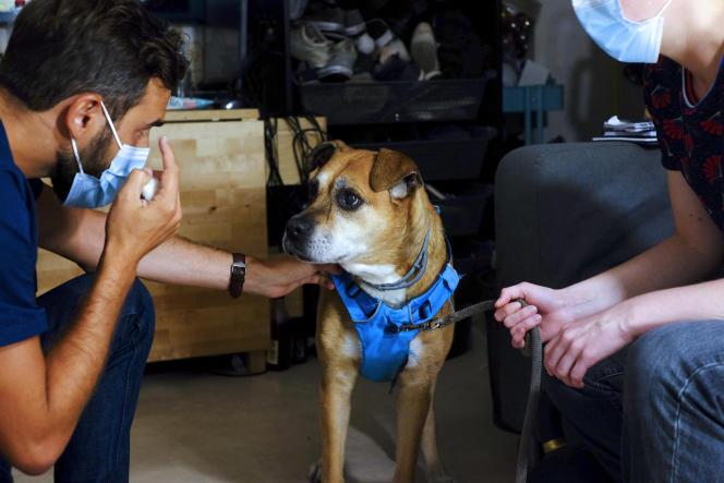 Le vétérinaire Pierre Fabing en intervention à Paris, dans le 17e arrondissement, le 7septembre 2021.