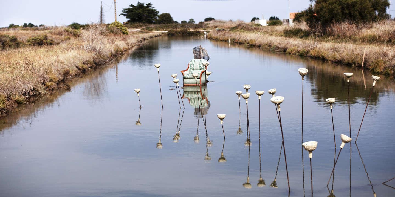 Regarder la vidéo Sur l'île d'Oléron, entre la pasionaria du paysage et le poète des marais, un duel sans fin
