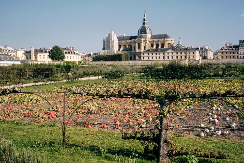la cathédrale saint louis vue depuis le potager du roi