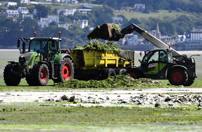 Nettoyage des algues vertes sur la plage de Saint-Michel-en-Grève, dans les Côtes-d'Armor, en Bretagne, le 20 juillet 2021.