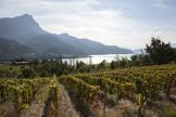 Les vignes du domaine du mont Guillaume, dans le massif de l'Embrunais (Hautes-Alpes), le 30 septembre 2021.