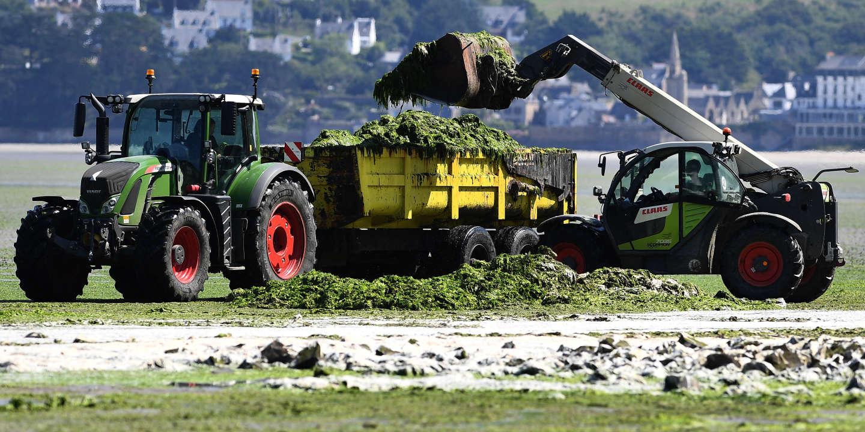 Algues vertes : « On ne peut faire disparaître l'azote. Chassez-le par la porte, il revient par la fenêtre »