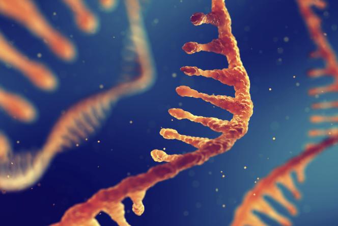 Molécules d'ARN (acide ribonucléique), illustration.