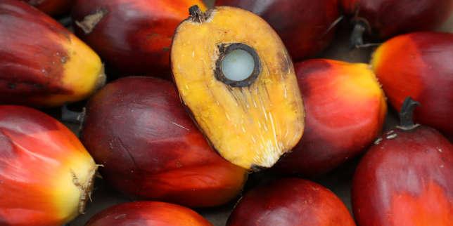 «Palma africana», de Michael Taussig: l'huile de palme ou l'humanité
