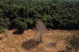 Une partie de la forêt amazonienne, au Brésil, en juillet 2021.