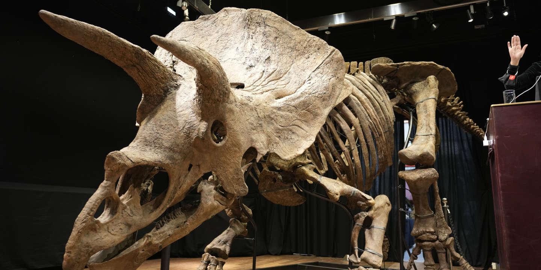 Le squelette de « Big John », plus grand tricératops connu, vendu 6,6 millions d'euros, un record