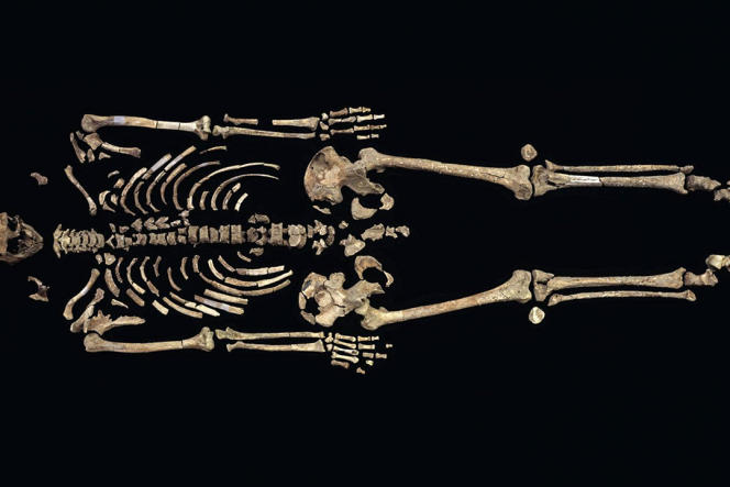 Le fossile de l'homme de Kennewick, vieux de 8500 ans.