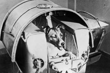 Picture from the Soviet daily Pravda dated 13 November 1957 of the dog Laika, the first living creature ever sent in space, onboard Sputnik II. Soviet spacecraft Sputnik 2 was launched from the Baikonur cosmodrome in Kazakhstan, 03 November 1957. Laika died a few hours after launch from stress and overheating, likely due to a malfunction in the thermal control system.