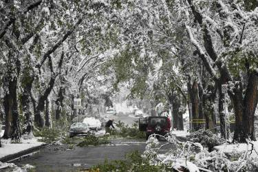 Local area residents clear away fallen tree branches after they collapsed from the weight of the heavy snow during a summer snow storm in Calgary, Alberta, September 10, 2014. Roads are blocked with fallen trees, over 30,000 people are without power and the city has opened it's emergency operation centre in the city according to local media reports. REUTERS/Todd Korol (CANADA - Tags: ENVIRONMENT SOCIETY)