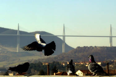 Vue réalisée le 13 décembre 2004 du viaduc de Millau (arrière-plan). Cet ouvrage, le plus haut pont du monde, maillon essentiel de l'autoroute A75 entre Clermont-Ferrand et Béziers, sera inauguré le 14 décembre prochain par le président Jacques Chirac, avant sa mise en service deux jours plus tard. Exceptionnel de part sa longueur (2.460 m), le nombre et la hauteur de ses piles (sept, dont la P2 et P3, à 245 m et 220 m, sont les plus hautes du monde) et des pylones haubannés (343 mètres pour le plus haut, soit 23 de plus que la tour Eiffel), le viaduc est un savant mariage d'acier et de béton dont la réalisation a nécessité les techniques les plus avancées. AFP PHOTO ERIC CABANIS  View of the Millau road viaduct, in the south of France, 13 December 2004 that will be inaugurated tomorrow 14 December 2004. The road surface is 270 meters above ground, a world record, and the total structure, with suspension cables added will be 343 meters (1,132 feet) above ground at its highest point or 23 meters higher than the Eiffel Tower